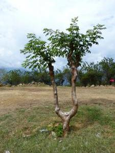 Puebl (9)